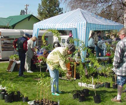 People browse a variety of plants for sale at the Earth Day celebration.