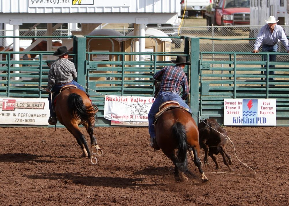 Two men work together to lasso a calf in the arena at the 2014 Klickitat County Fair.