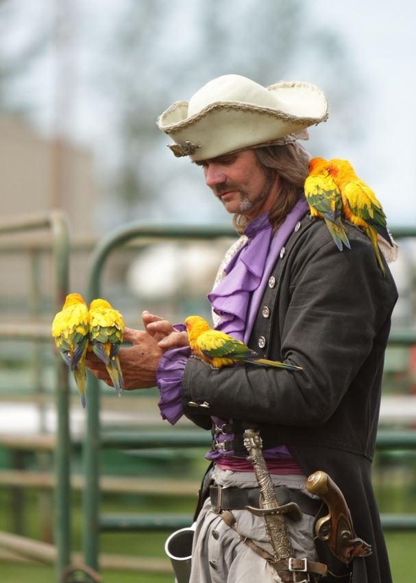 A pirate holds 5 colorful birds.