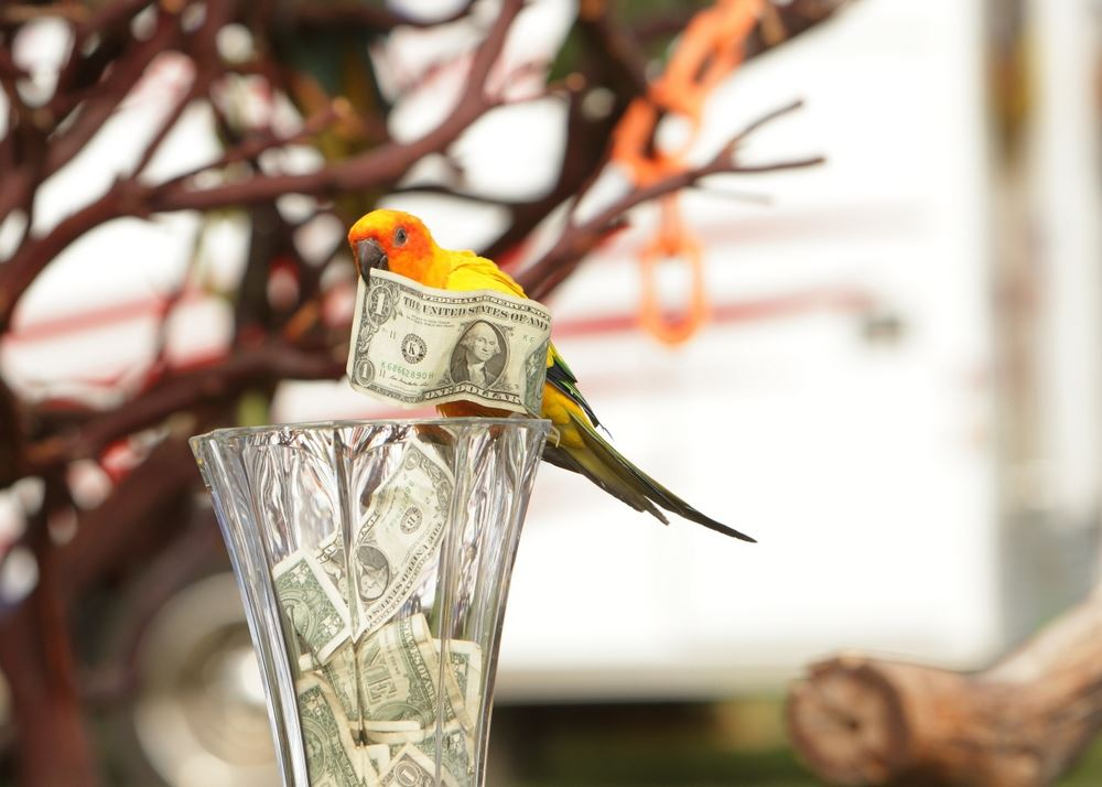 A parrot adds a dollar bill to a collection at the 2014 Klickitat County Fair.