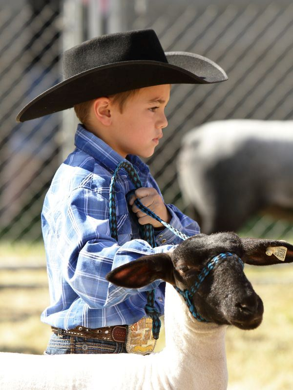 A little boy shows a sheep at the 2015 Klickitat County Fair.