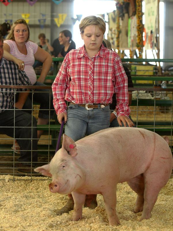 A girl shows a big pink pig at the 2015 Klickitat County Fair.