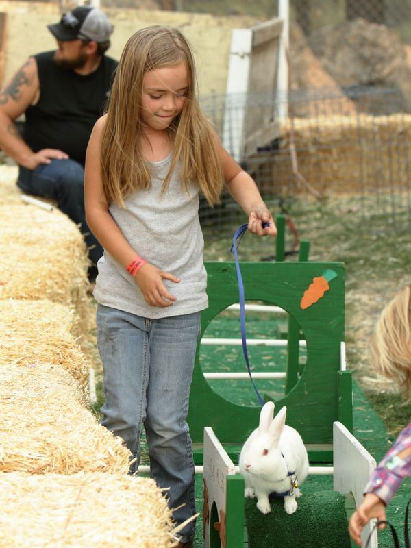 A young girl shows her rabbit at the 2015 Klickitat County Fair.