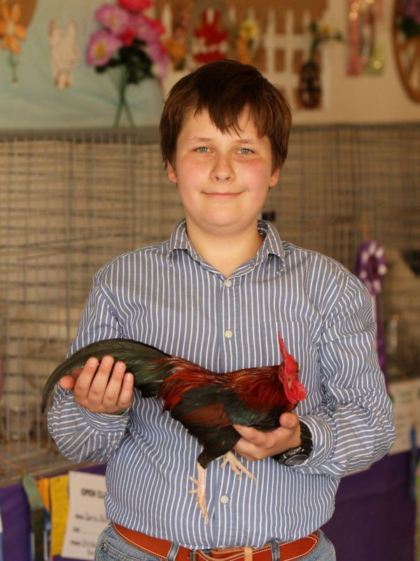 A young boy shows off his show rooster at the 2015 Klickitat County Fair.
