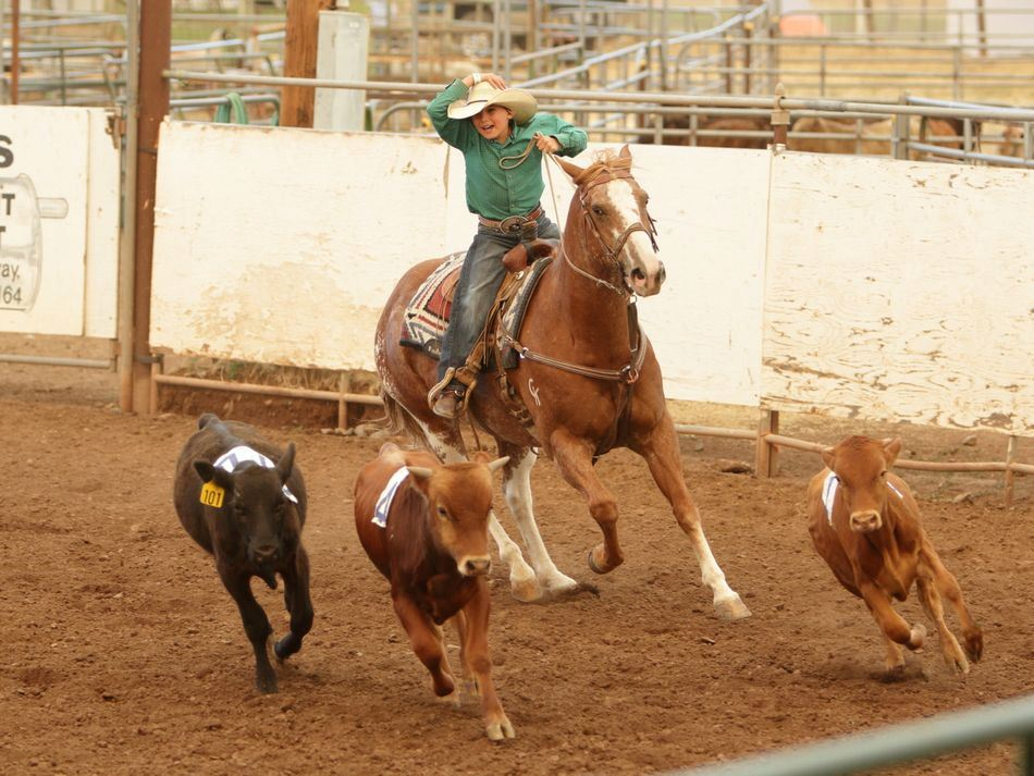 A boy herds cattle on his horse at the 2015 Klickitat County Fair.