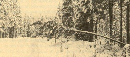 A fallen tree hovers over a snow covered road.
