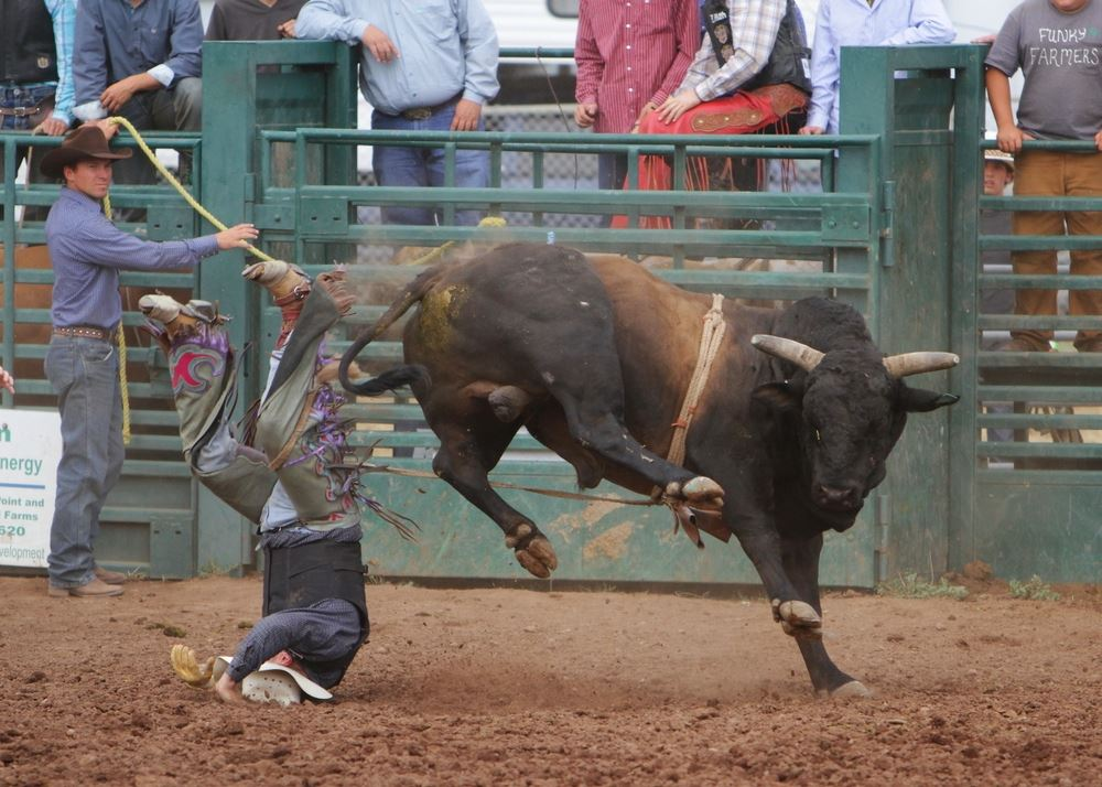 A man lands on his head after falling from a bull at the 2014 Klickitat County Fair Rodeo.