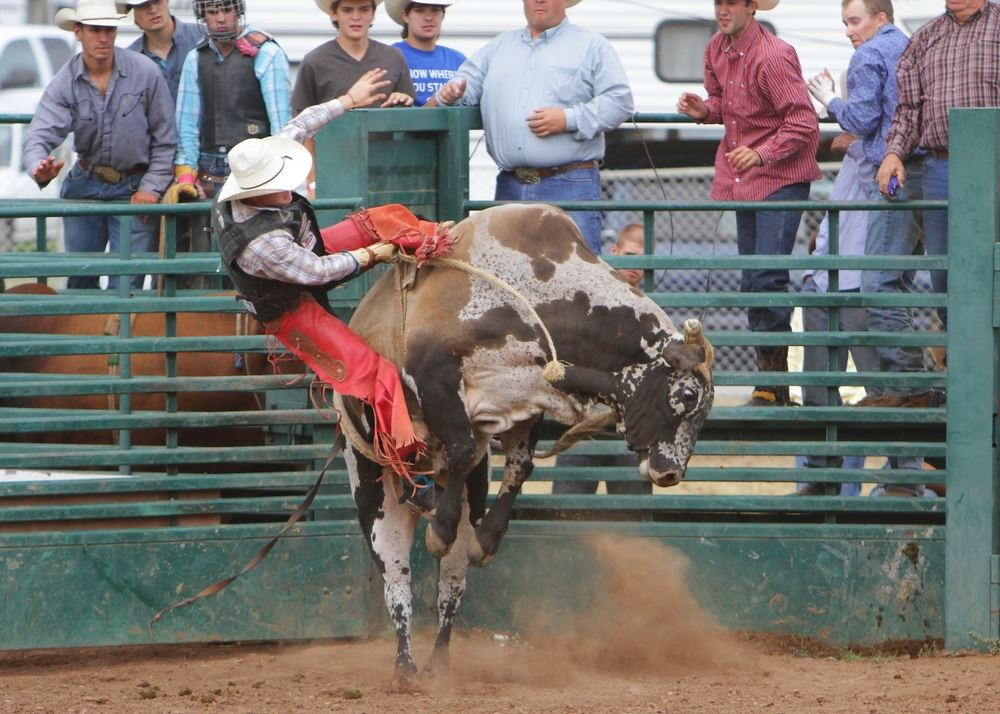A man is thrown from a bull during the 2014 Klickitat County Fair Rodeo.