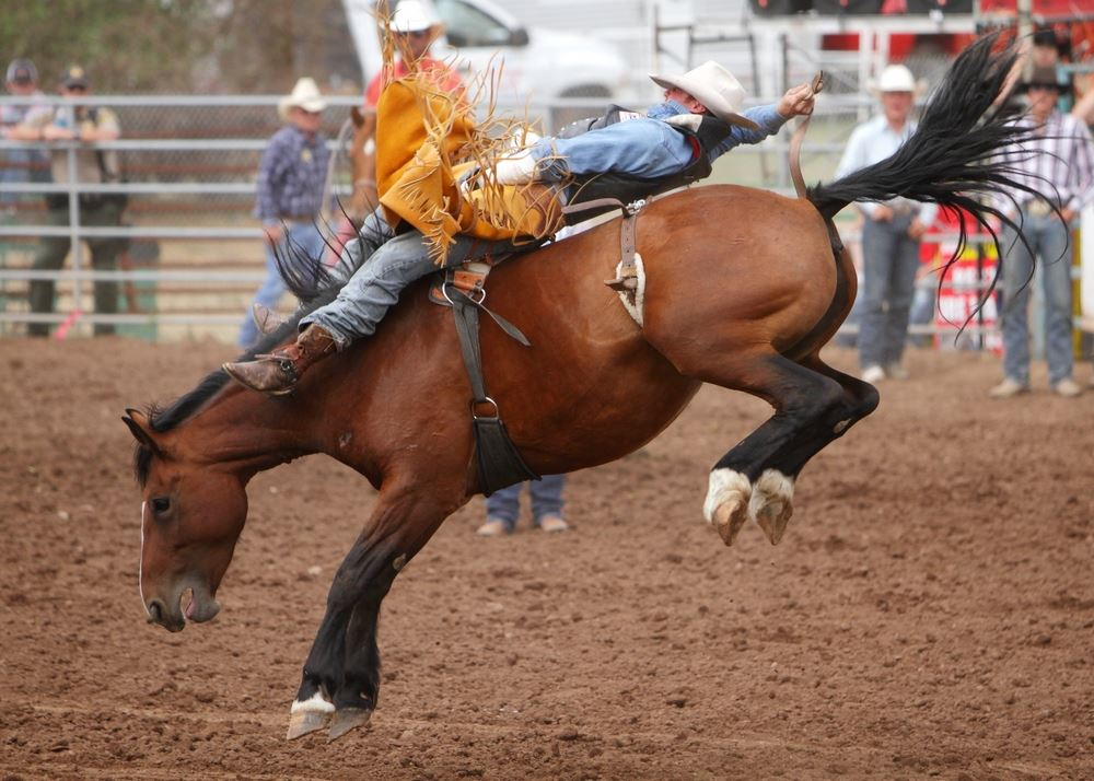 A man gets thrown backward on a bucking horse at the 2014 Klickitat County Fair Rodeo.